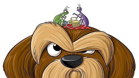 flea on dog head