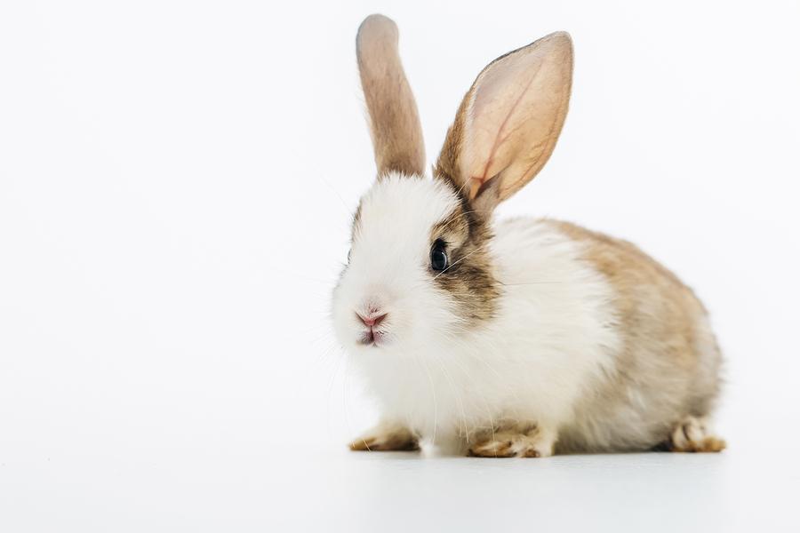 Bunnies Iowa City Ia Leash On Life Llc